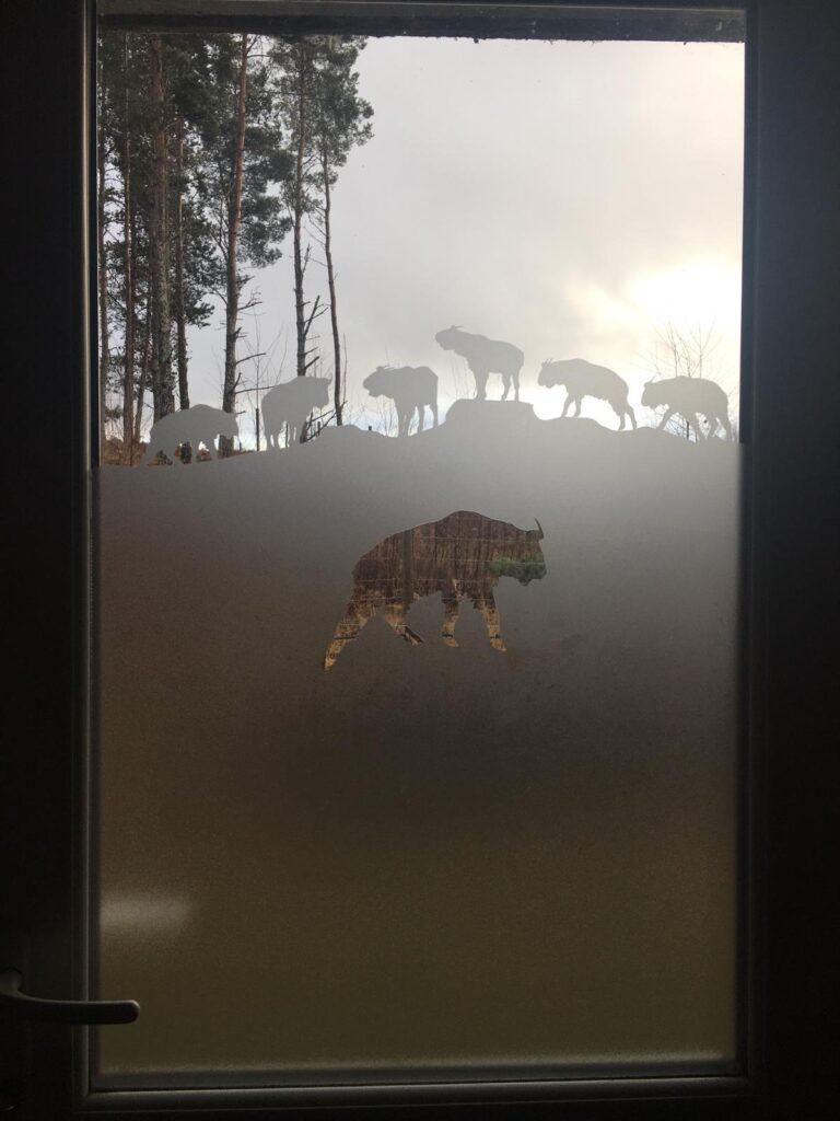Interior window graphics with animals